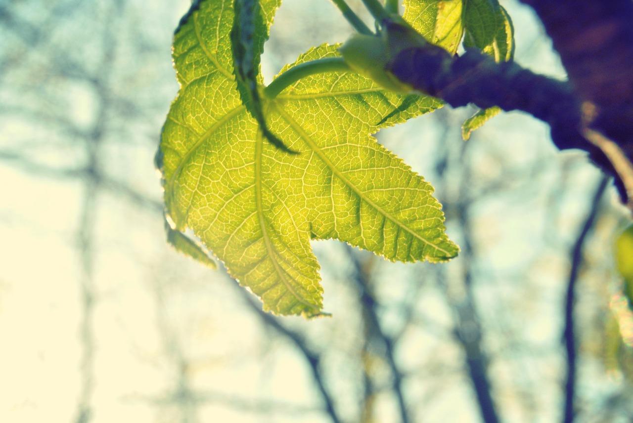 leaf-336588_1280
