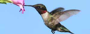 What Google's Hummingbird Algorithm Means for Small Business